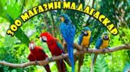 Зоомагазин «Madagascar»