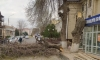 Незаконная вырубка деревьев в Самарканде продолжается