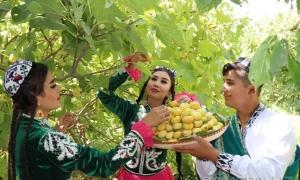 Фото, видео: «Праздник Инжира» в Самарканде