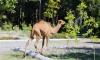 Зарафшанский национальный парк готов встречать посетителей